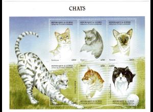 Guinea Kleinbogen Katzen