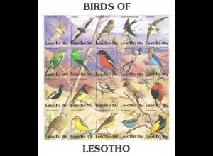 Lesotho Kleinbogen Vögel